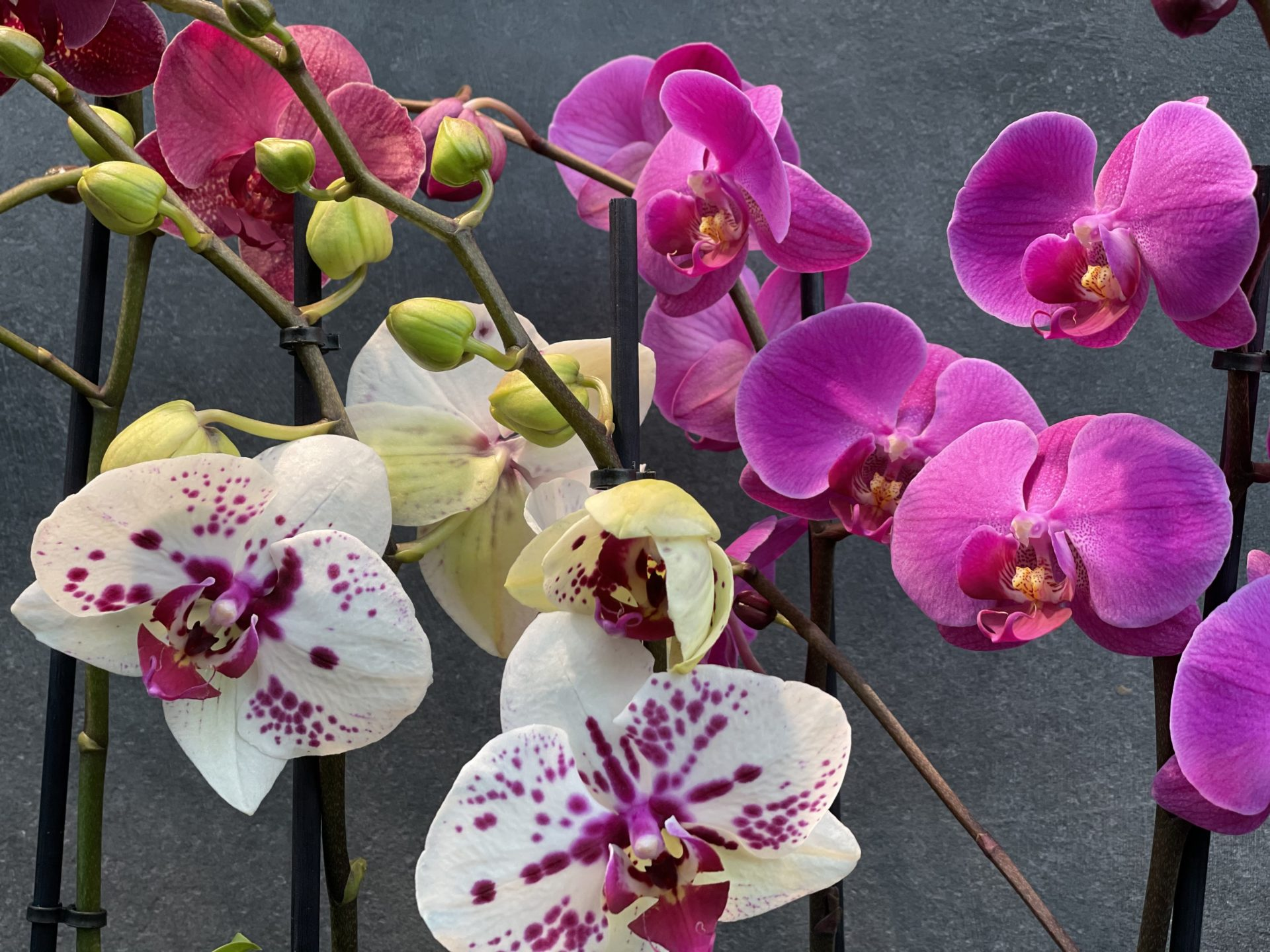Orchideen ab 9,99€